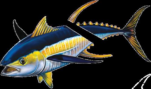 Tuna with Split Reverse