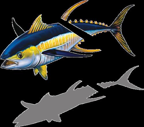 Tuna with Split Reverse w/sh