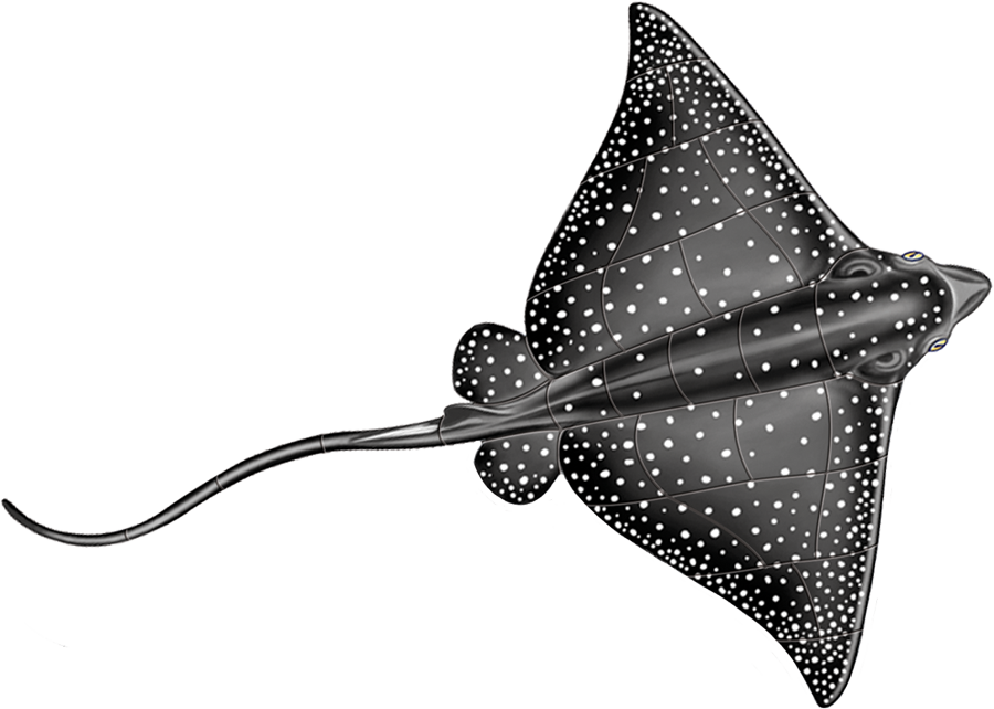 PORC-ER48  Spotted Eagle Ray.png