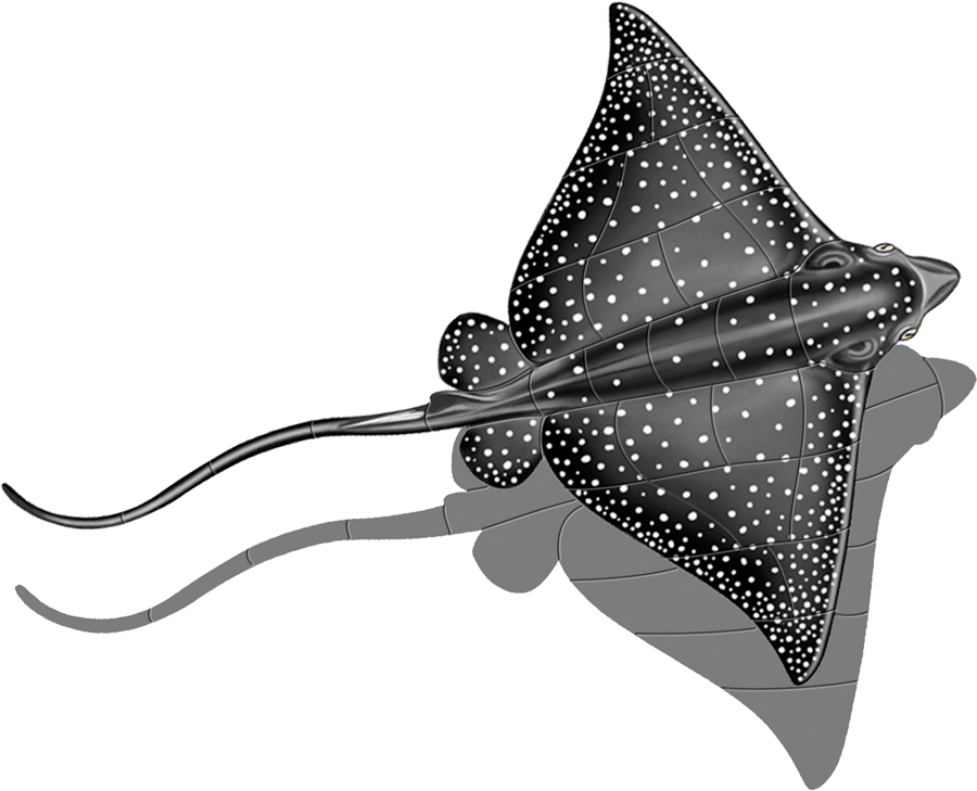 PORC-ER48-SH Spotted Eagle Ray (with shadow) copy.png