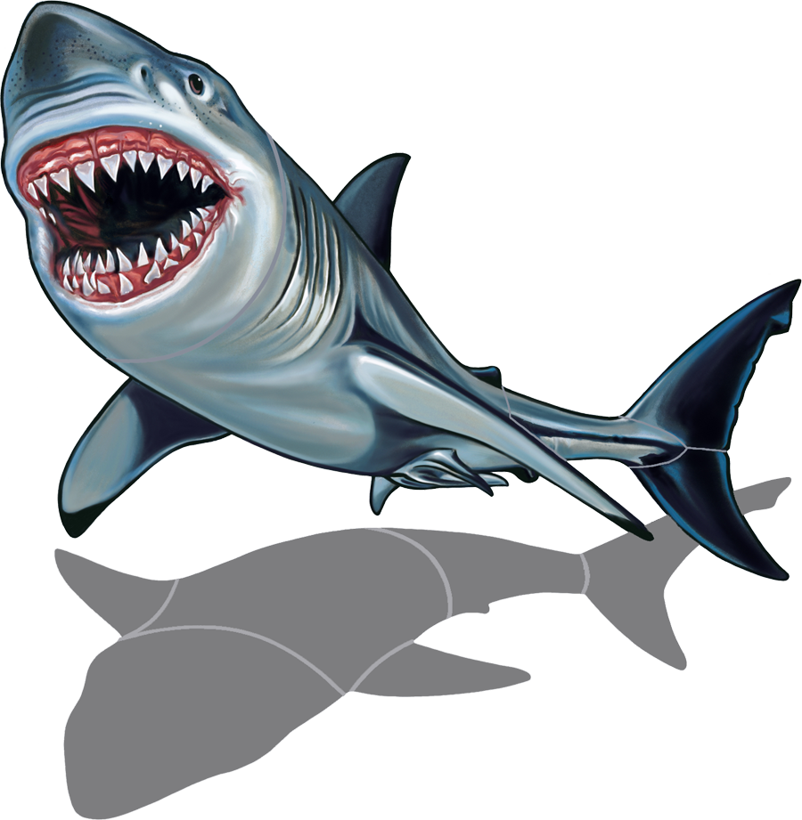 Shark with Shadow copy.png