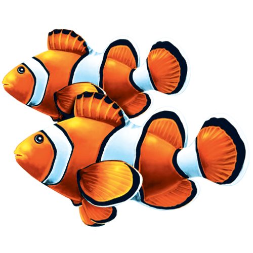 Clown Fish Double