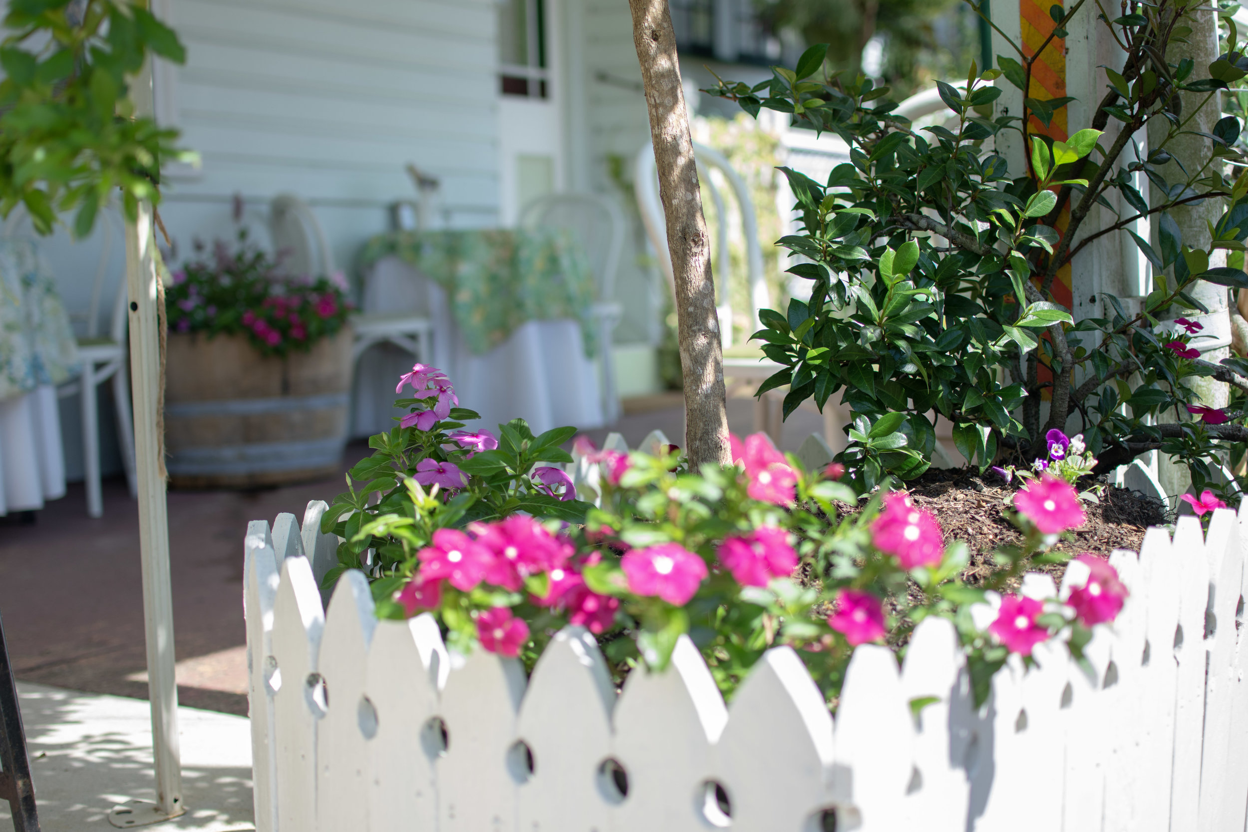 brooke flower bed.jpg