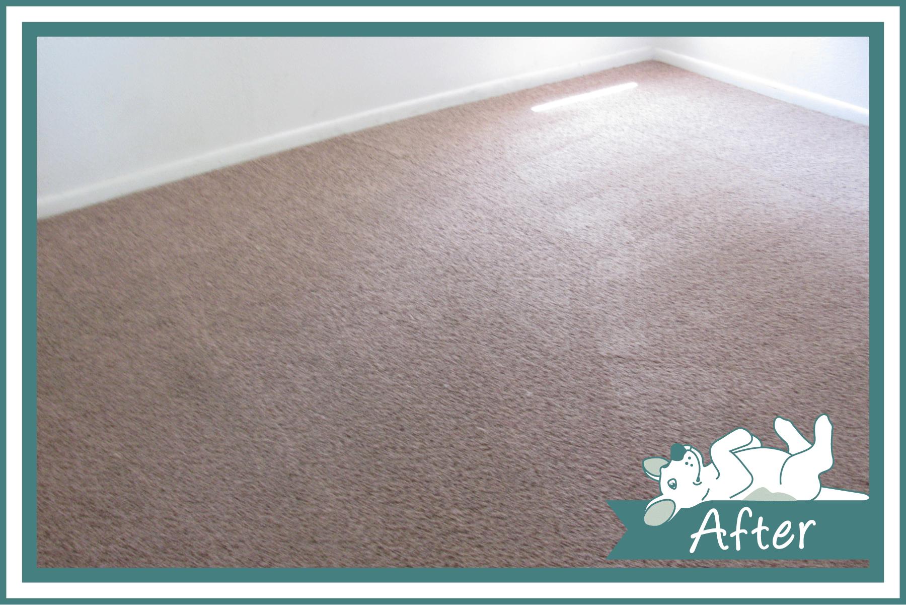 Dog-Gone-Clean-Carpet_WEB-BEFORE-AFTER_Gallery3_v1.png