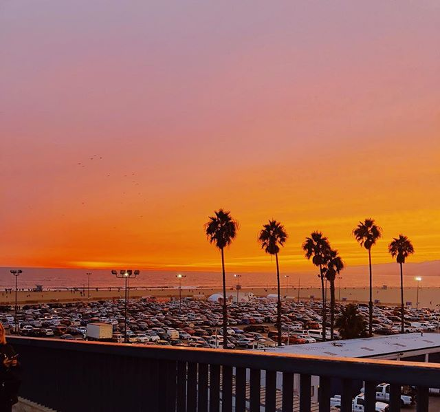 """Orange you glad it's spring?!"" - dad joke of the day brought to you by @etjarks24 . . . . . #springtime #spring #santamonica #vacationvibes #palmtrees #blogger #livingaf #citylife #vacationmode #sunsets"