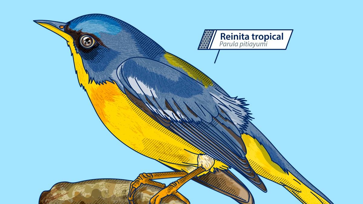 ekon7_ilustraciones_publicaciones_semana_reinita.jpg