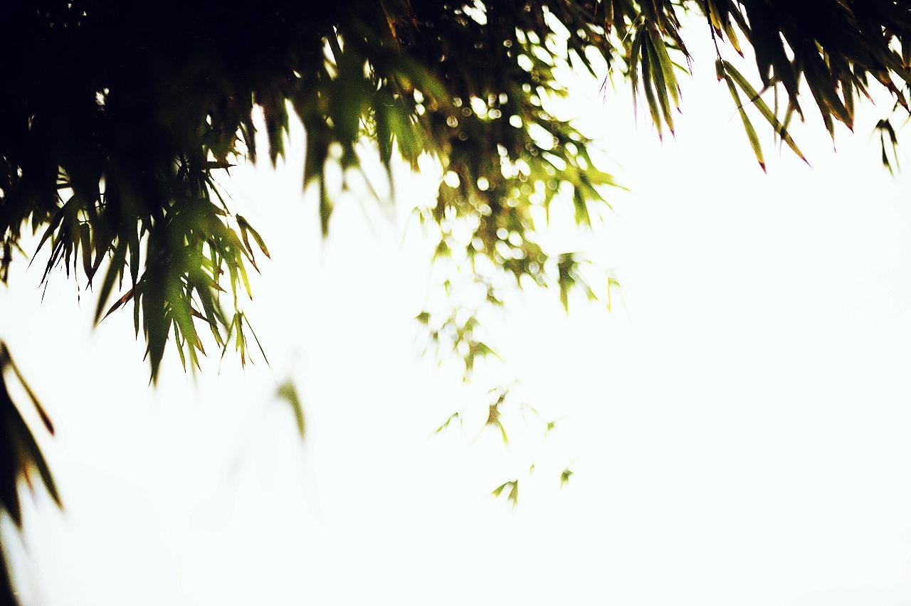 MYC_7709.jpg_effected.jpg