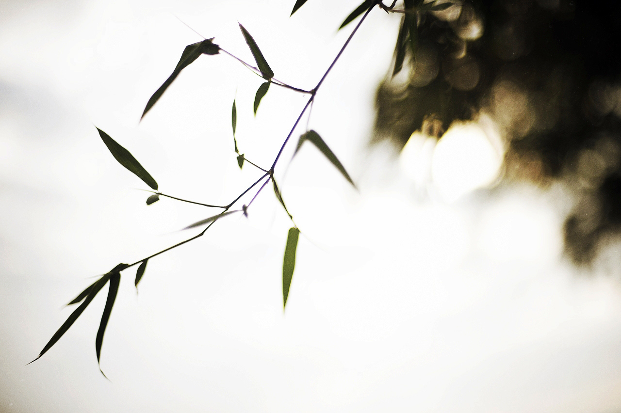 MYC_7749.jpg_effected-001.jpg