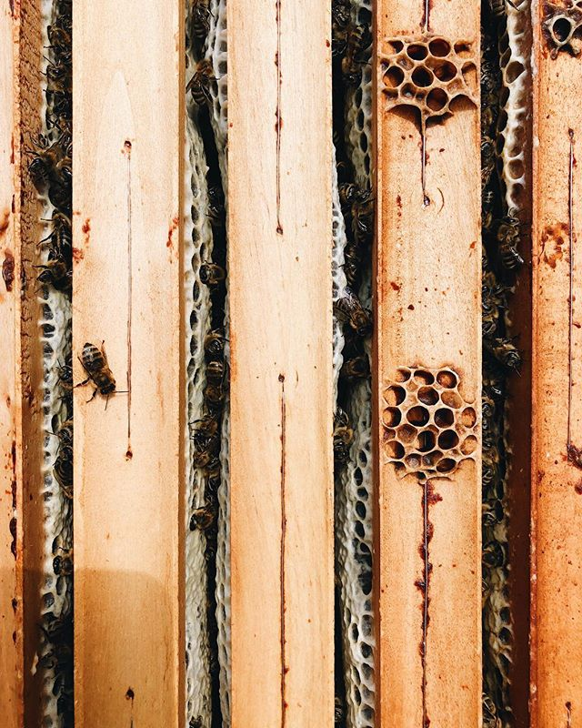 """All glued together."" 😋#antonhoney #beekeeping #honeybees #beelove #nature #freebees #carniolanbees #beekeepinglife #savethebees #beehive #slovenianbeekeeping #beethinking #insidethehive"