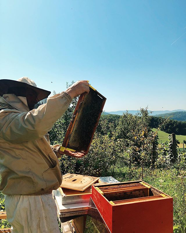 Perfect day for collecting honey ☀️🍯 #antonhoney #beekeeping #honeybees #beelove #nature #freebees #carniolanbees #beekeepinglife #savethebees #beehive #slovenianbeekeeping #beethinking #honey #honeycomb #bees