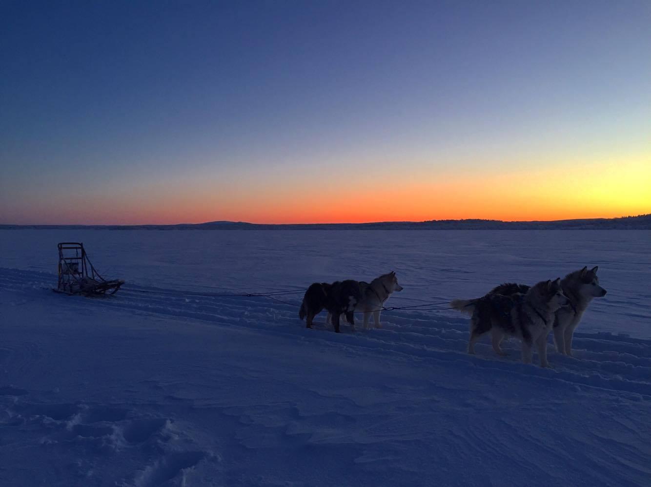 Hundekjøring i mørketida / fargetida i nord er magisk!