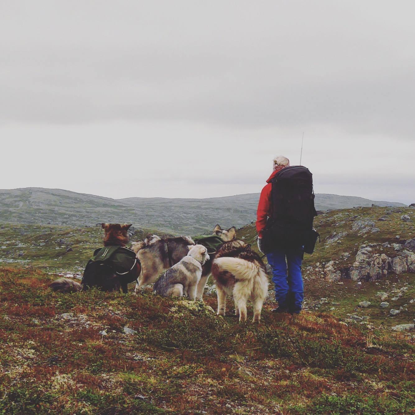 Gjengen min på tur, før vi ble to hunder rikere ... :)