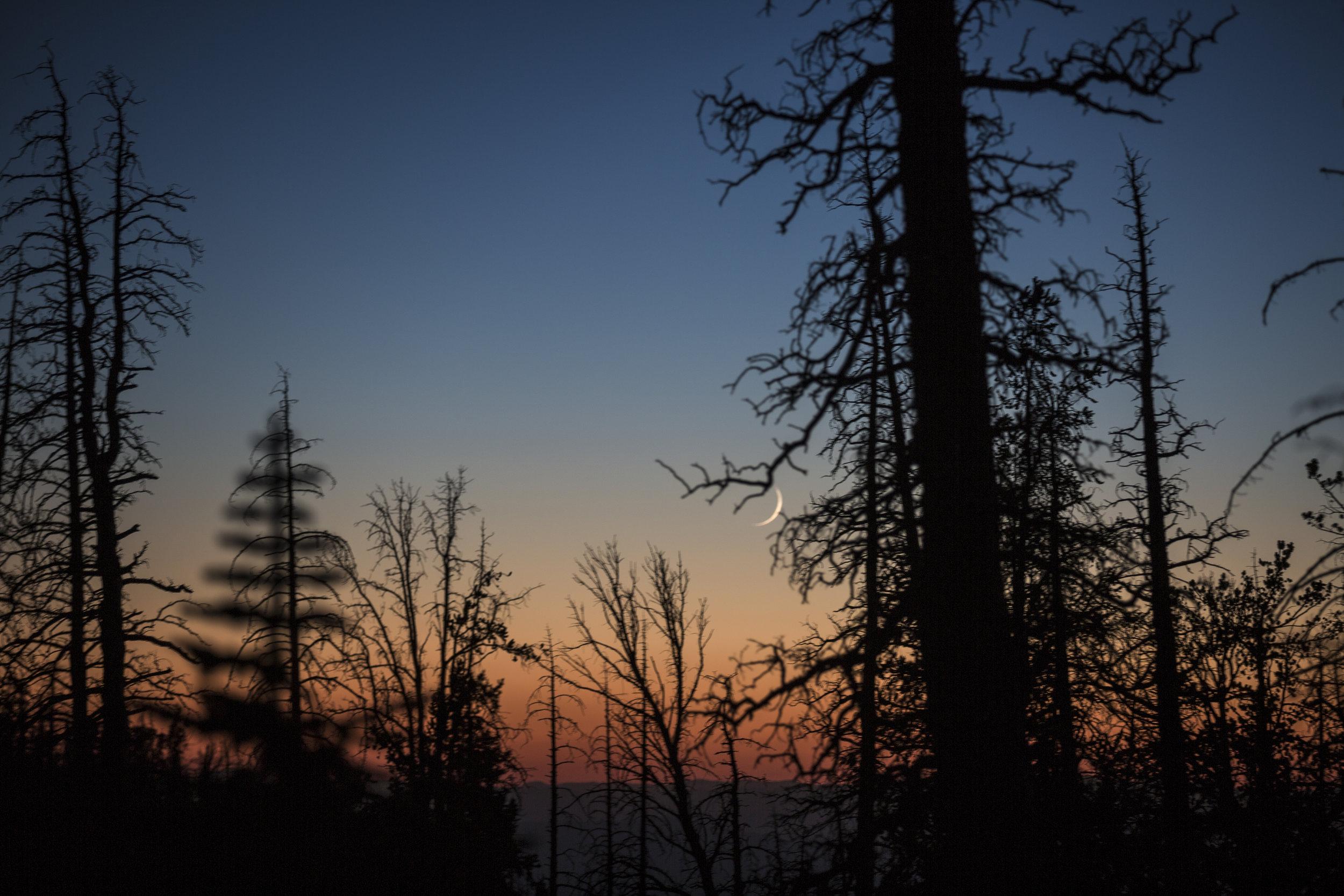 Evening - Cedar Breaks