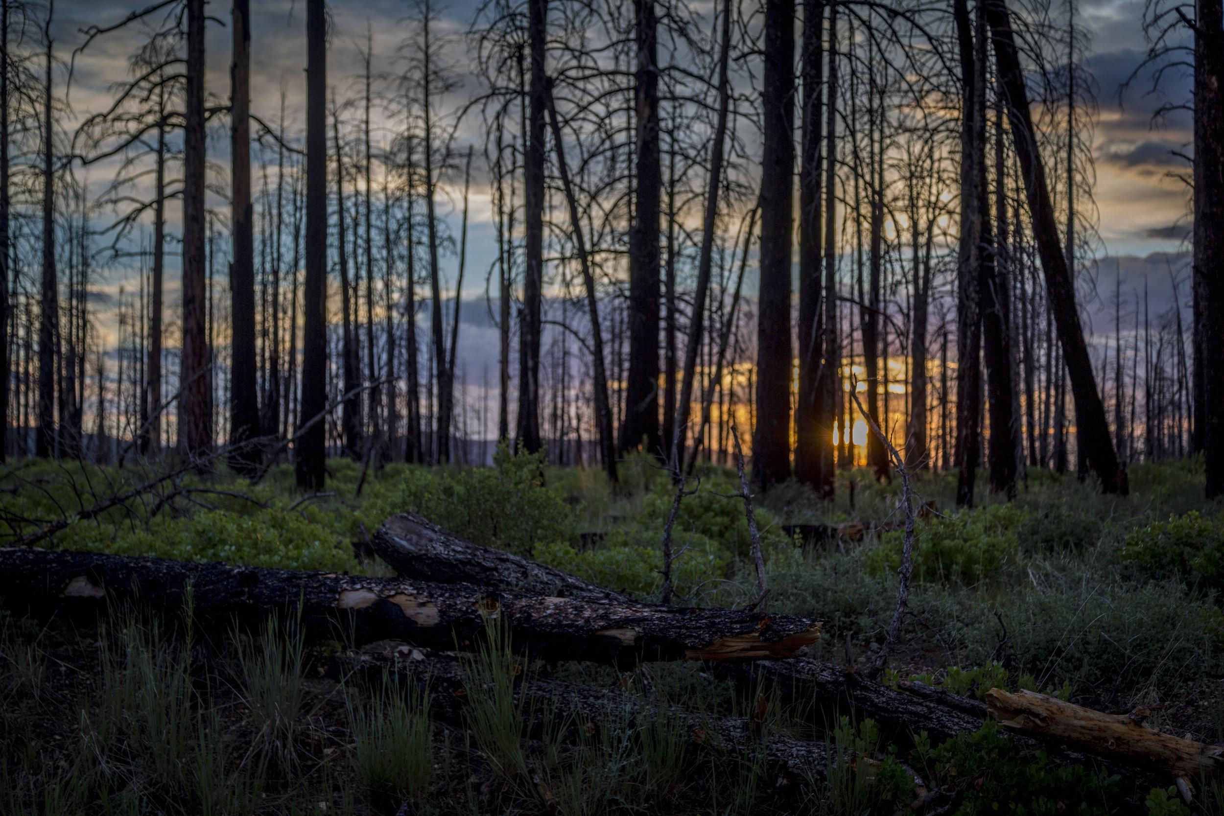 Sunset - Bryce Canyon