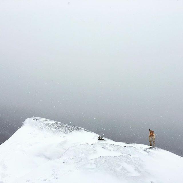 Surveying the wild white yonder... @Magnarp @magroCraggie @PorkPitDog #dontjump #safetyVest