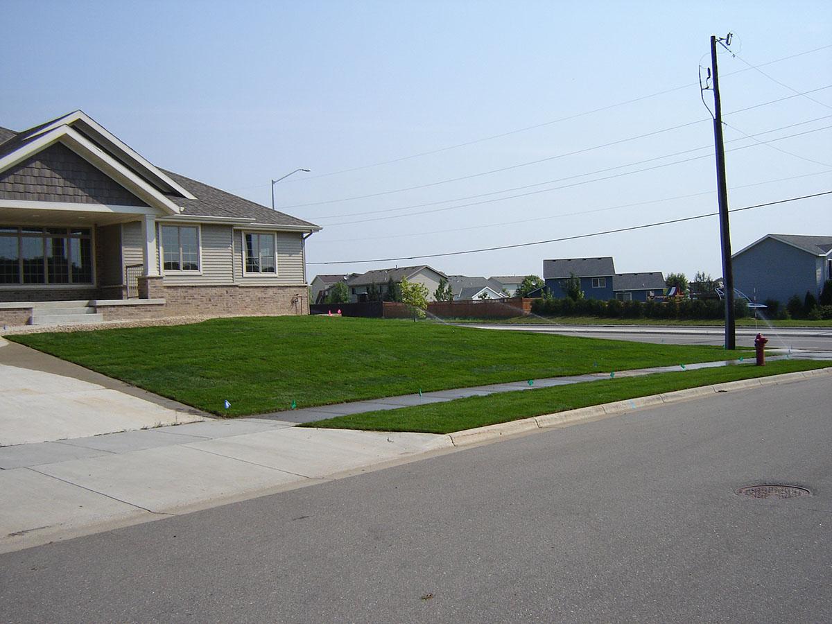 lawn seed sod 10.JPG