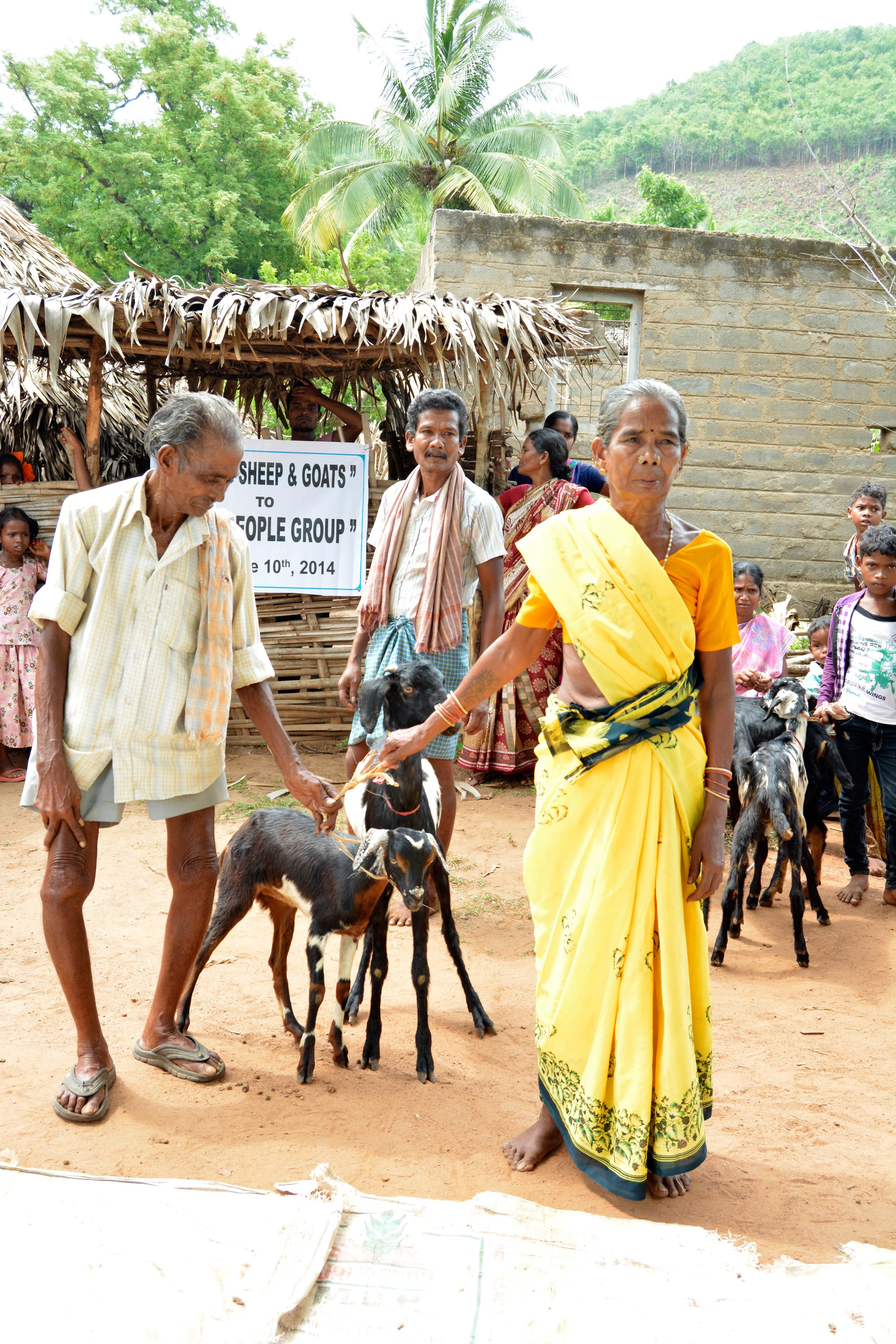 Give a Goat (2)