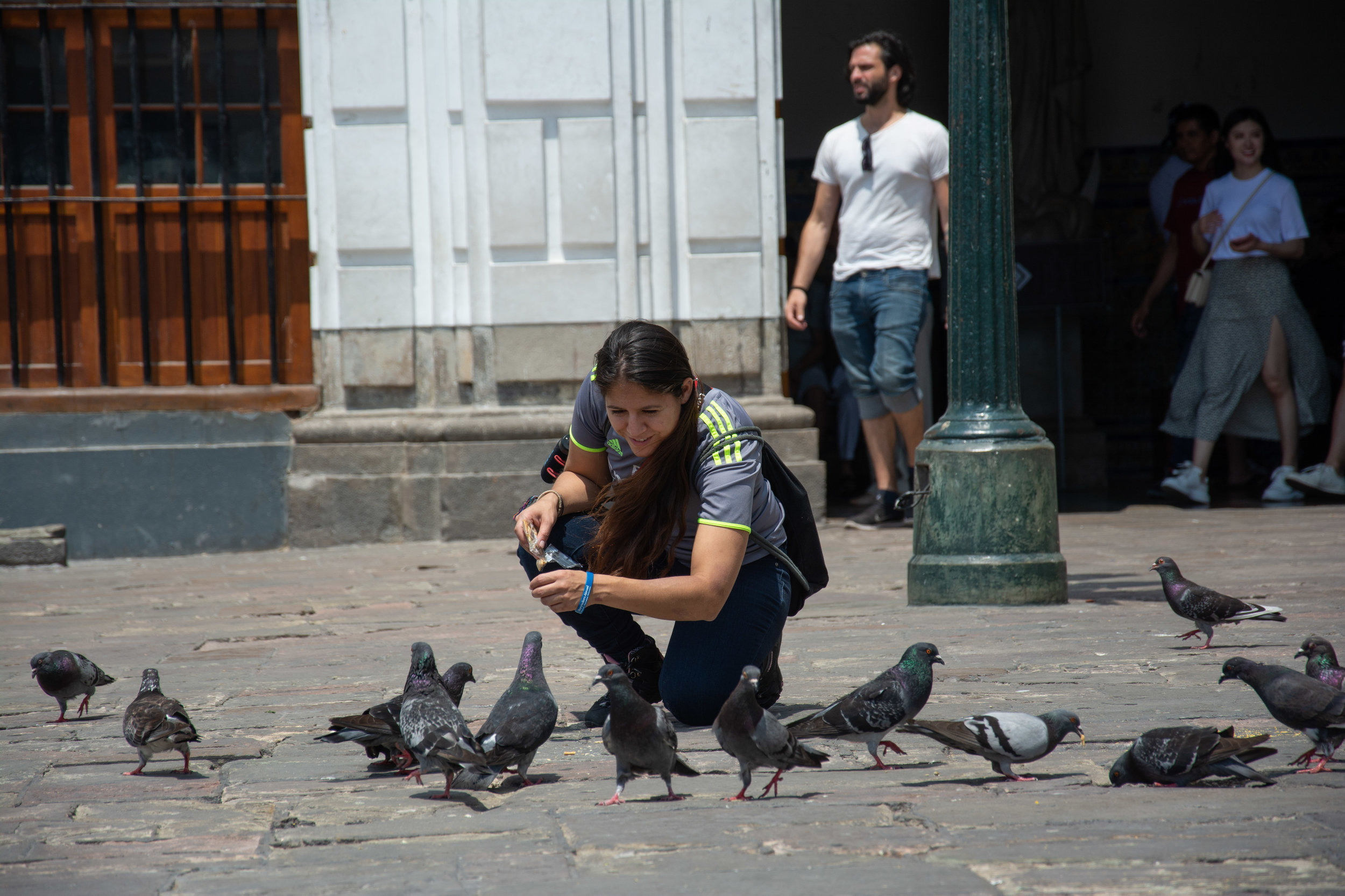 Pigeon Whisperer