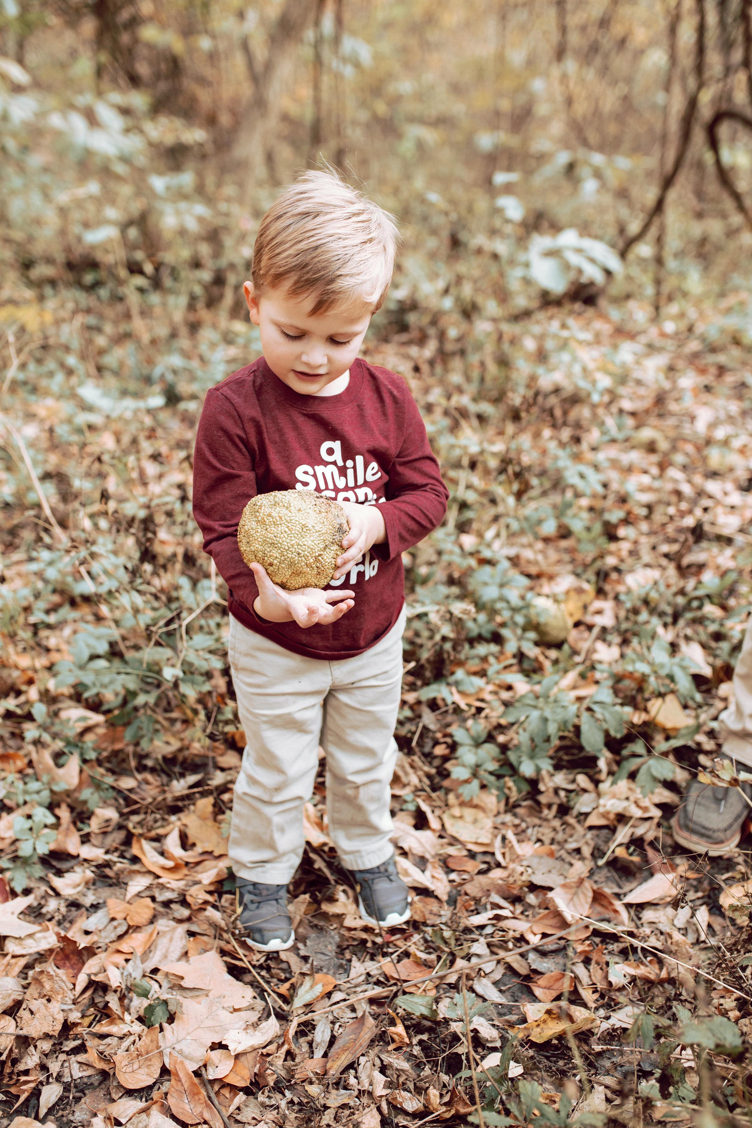 boy finds a dinosaur egg in overton park