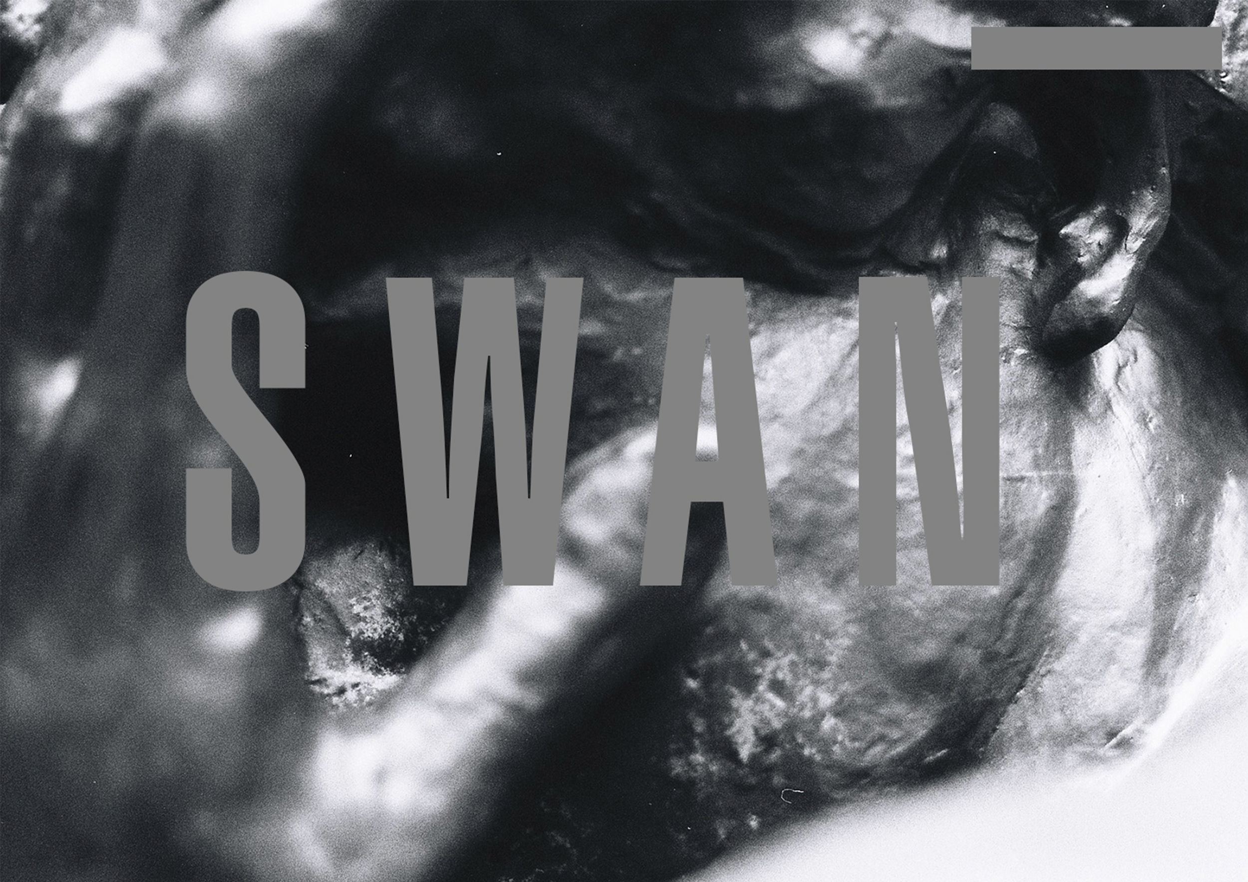 NEW COLLECTION _ SWAN COMING SOON ...