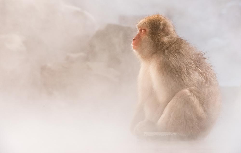 monkey-meditation.jpg