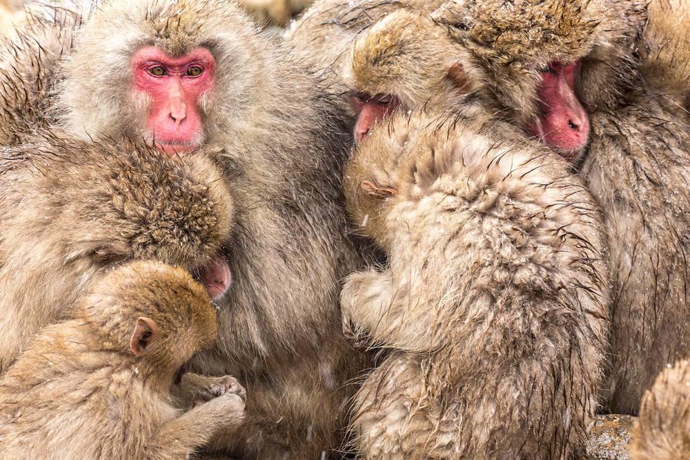 monkey-group.jpg
