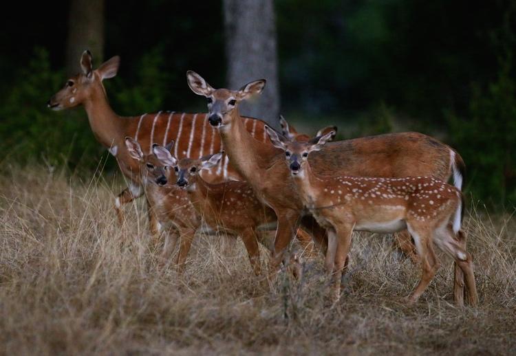 Deer_Family.jpg