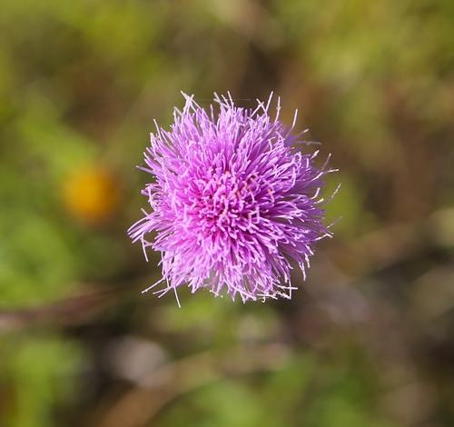 Pink+Bloom.jpg