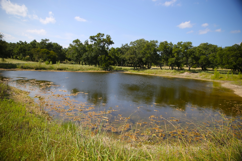 Asante+Pond+2.jpg