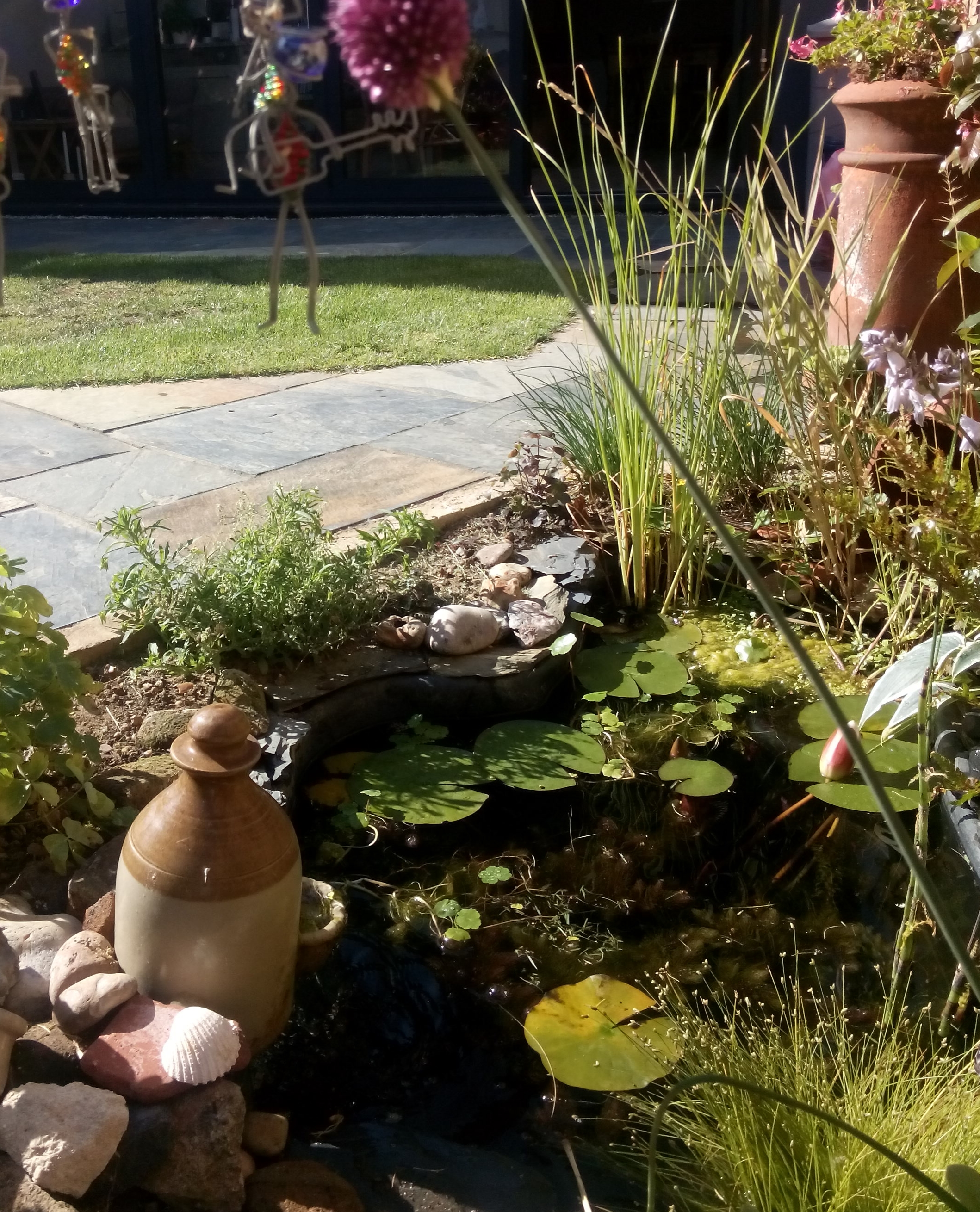High summer in my parents garden: all slate,grass, water, music men and plants