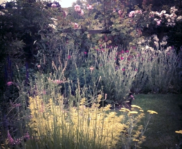 My in laws garden at twilight in my favourite spot to disappear in like a tiger hidden in the grasses