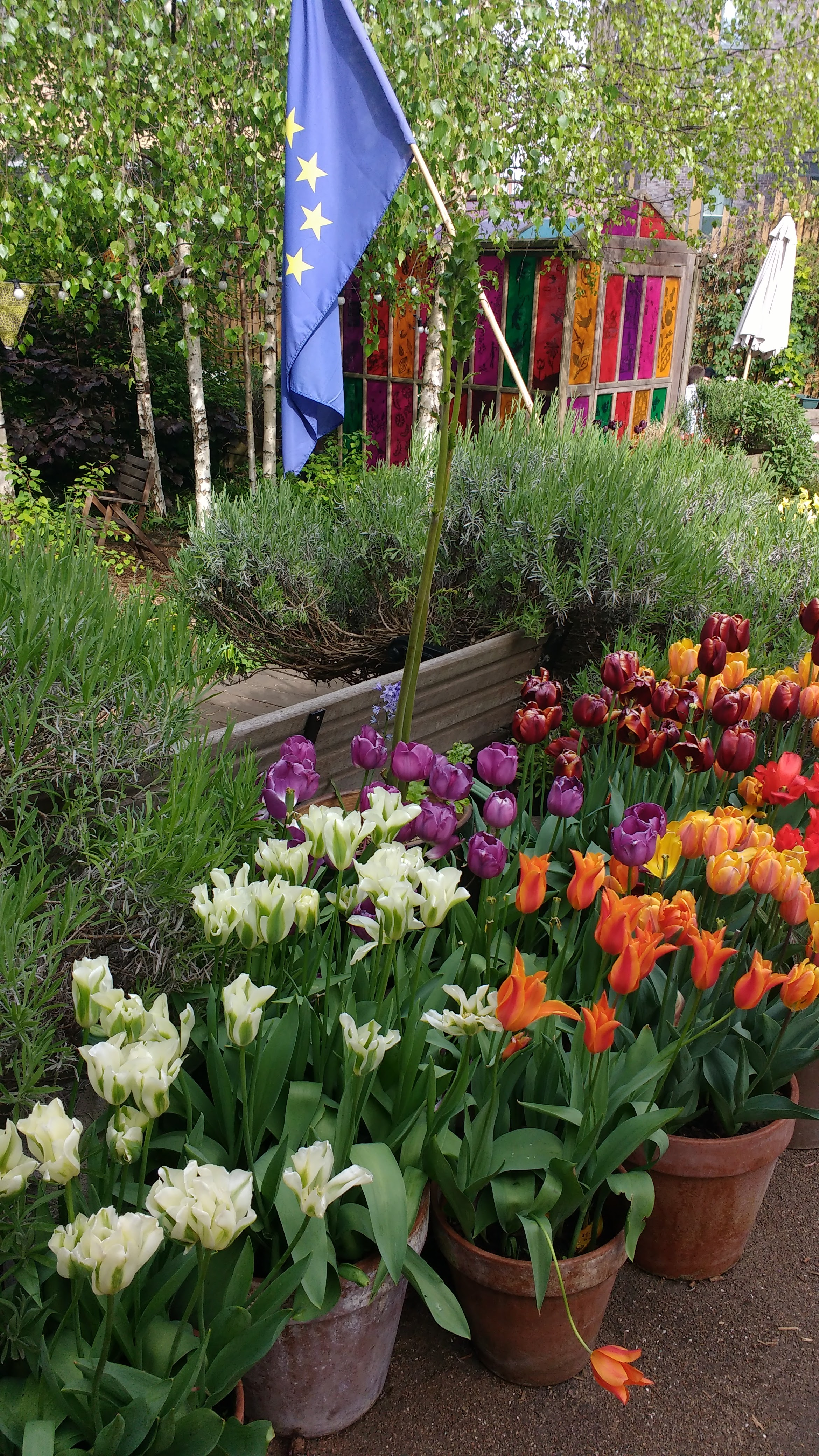 A happy european union: tulips, lavender, birch trees and stars