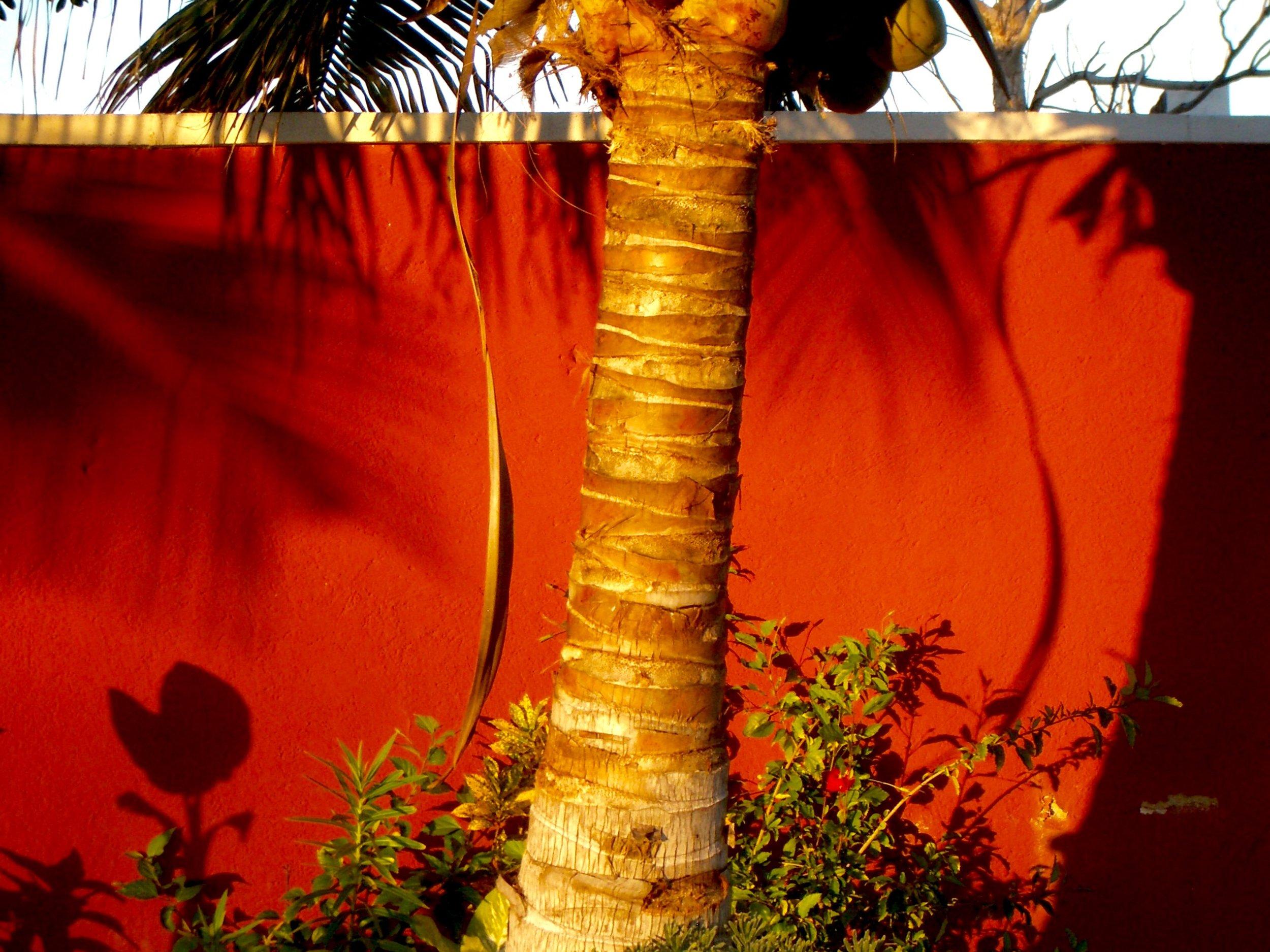 solarity, the mayan coast, mexico © colin goedecke
