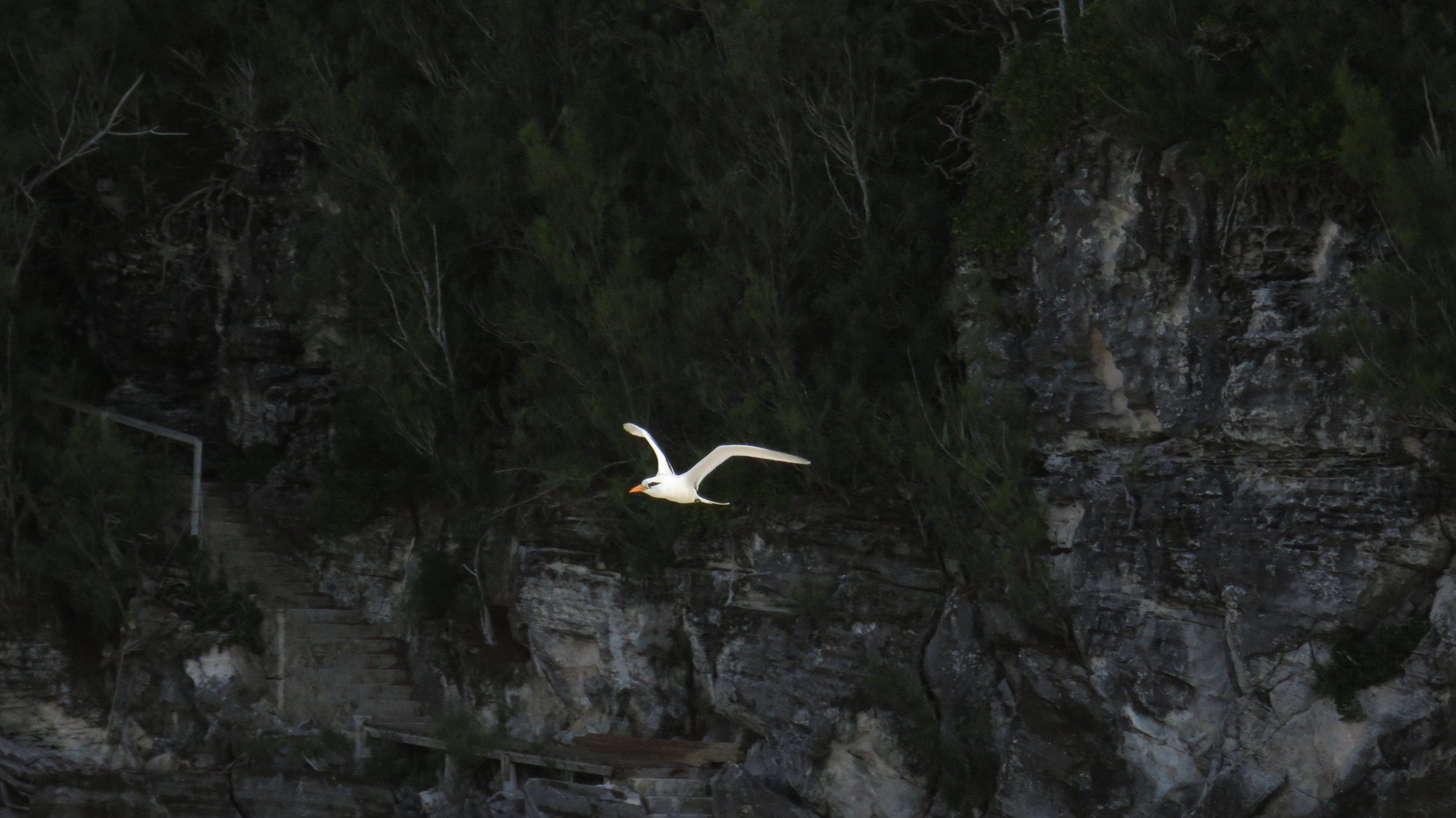the freedom of flight © colin goedecke