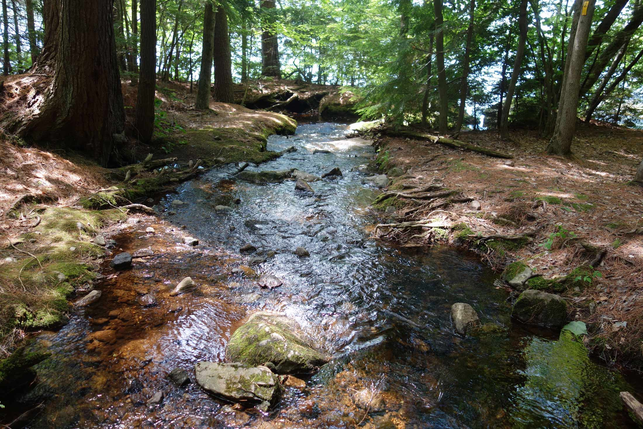 The-Fells-Estate-Jon-Hay-Forest-Stream.jpg
