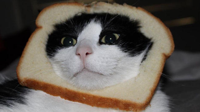 Image source: http://knowyourmeme.com/memes/cat-breading