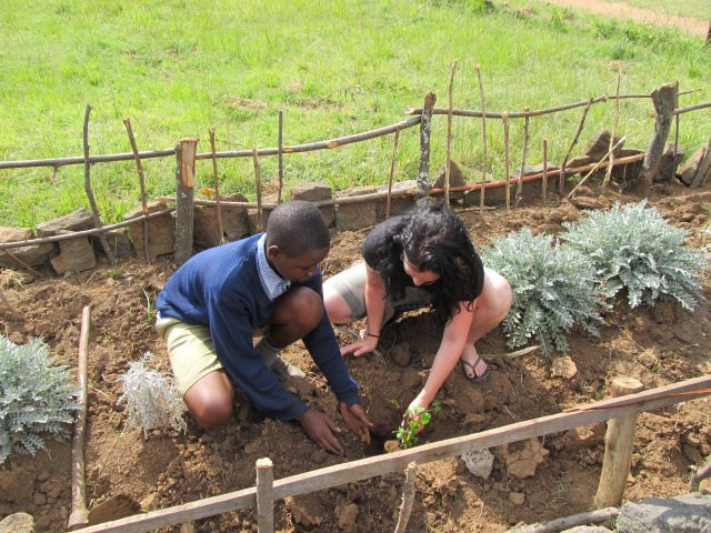 As a Thank You and a Remembrance, Shalom Primary School had Cat Ross plant a rose bush in their school yard.