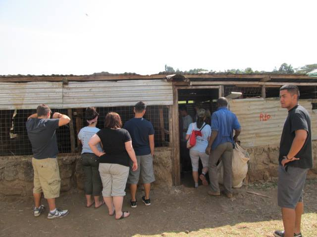 Maples Kenya Connection Group checking out the second sustainable project they had funded, the Dairy Project. With the help of an MCIC grant and their fundraising efforts they have put together this project and should be SUPER proud of themselves!