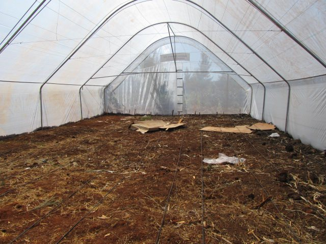 Amiran Greenhouse Sustainable Project funded by the Maples Kenya Connection Group