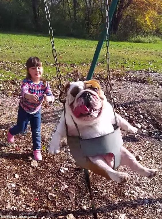 Dog-Swing.jpg