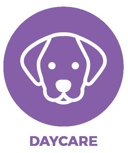 Dog-Day-Care-Austin-Texas