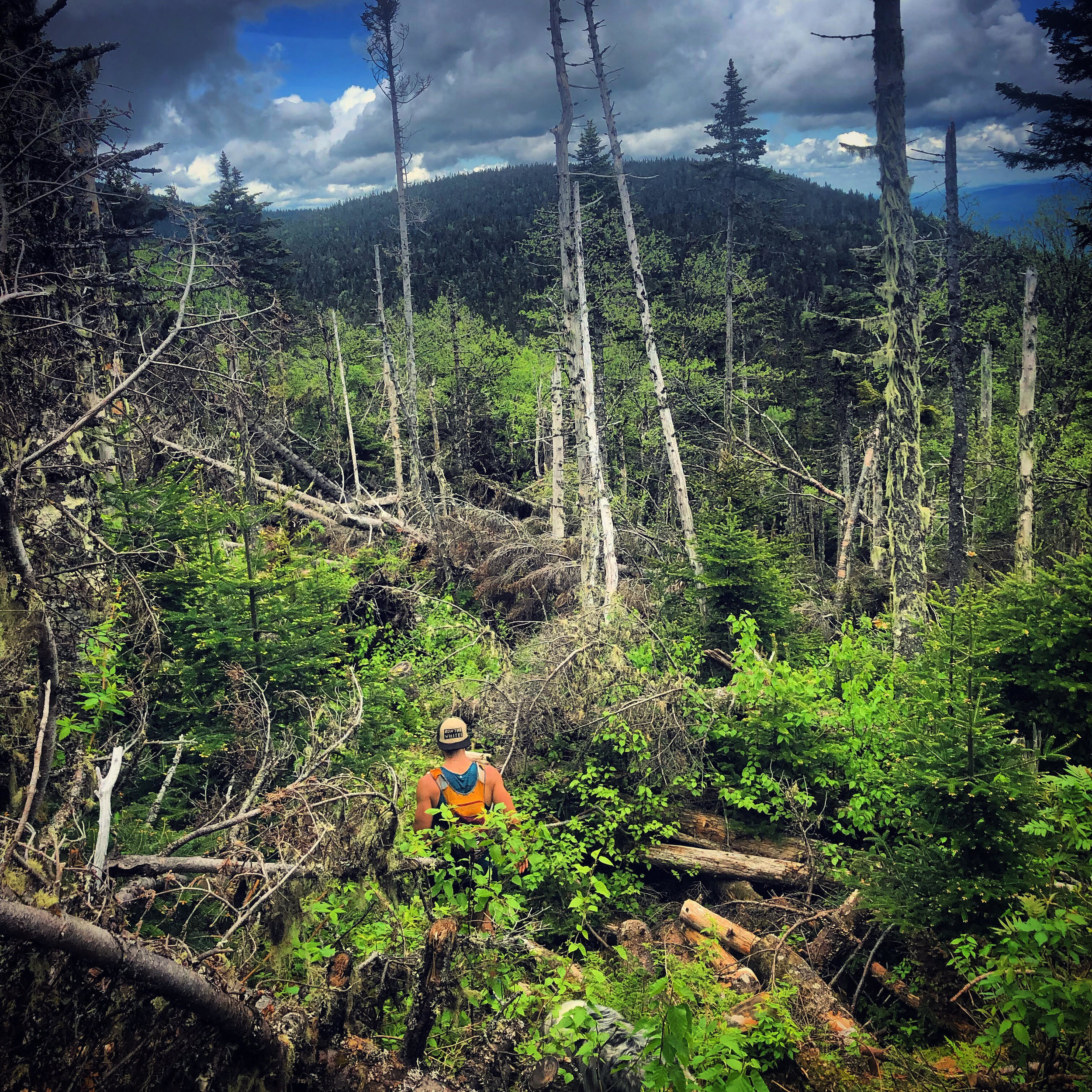 The wild and rugged Kilkenny Ridge Trail across the Weeks