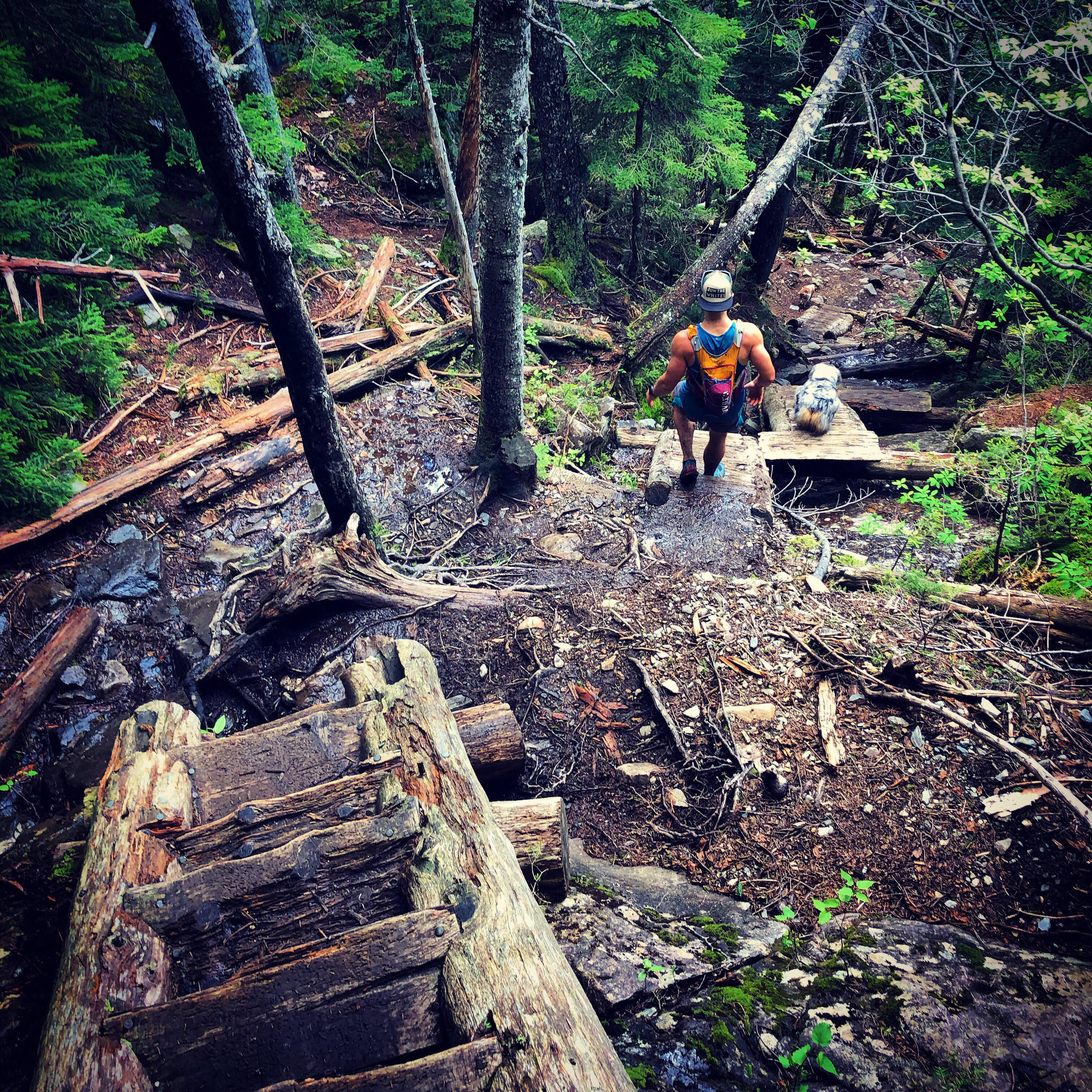 Steep ladders on the Willey Range Trail