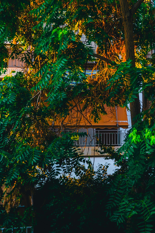 Backyard Athens views