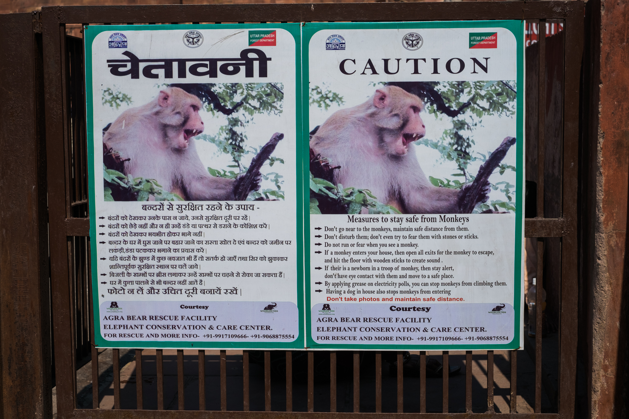 Agra India Travel Street Photography (22 of 39).jpg