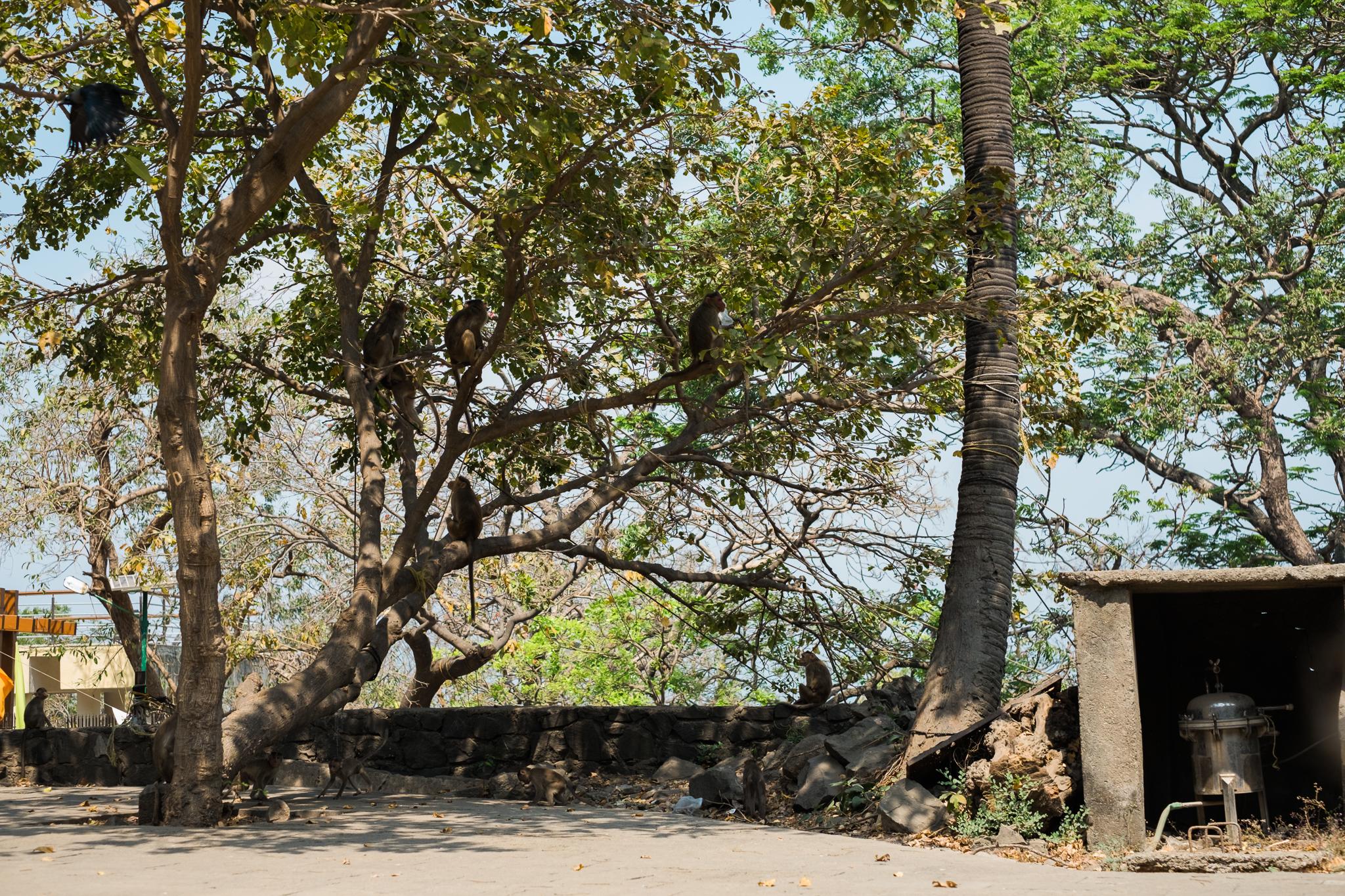 Mumbai India India Travel Street Photography (11 of 55).jpg
