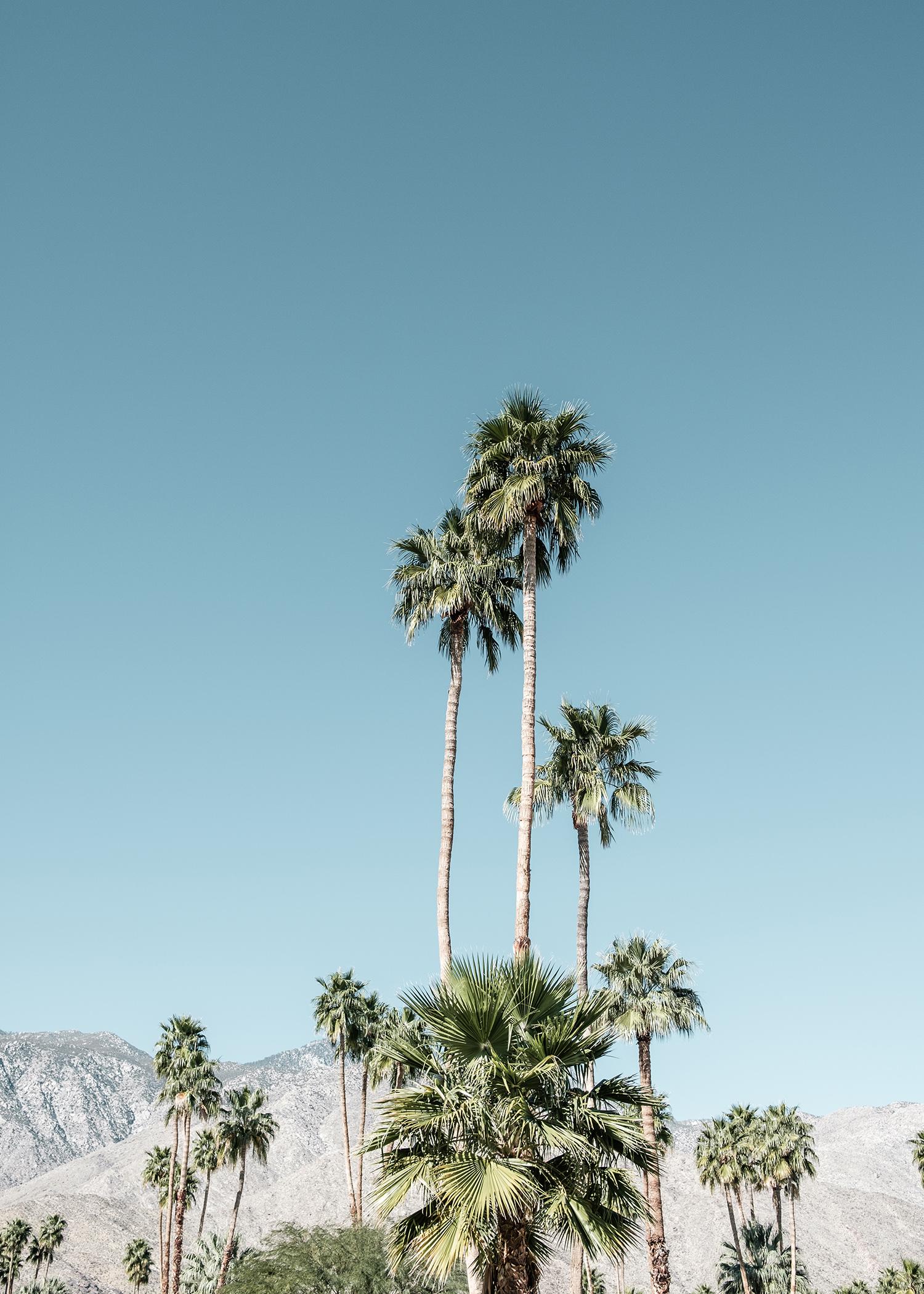 modernism_week_palm_trees_springs_ZIDS4650.jpg