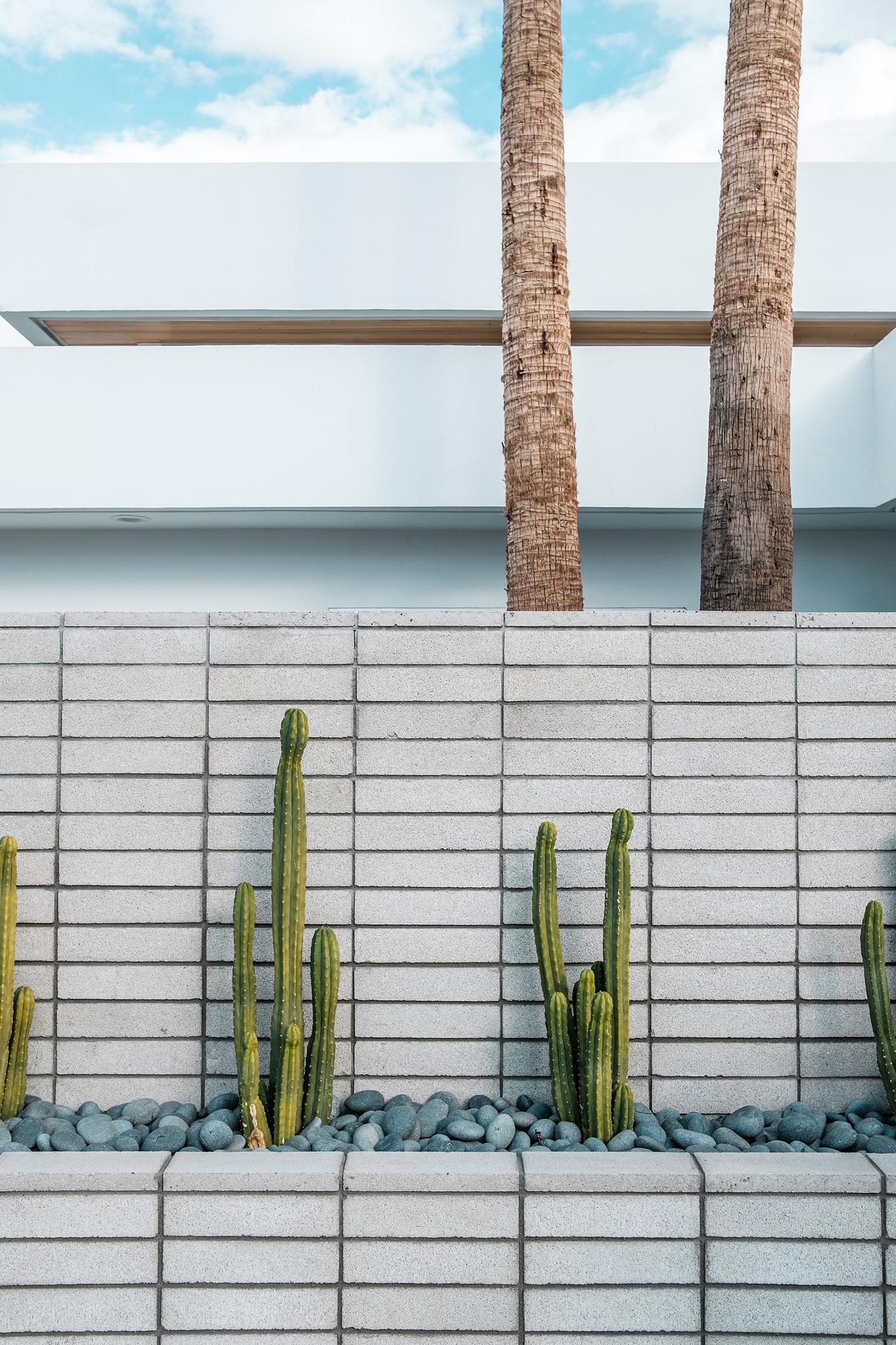 concrete_bricks_garden-tour_cactus.jpg