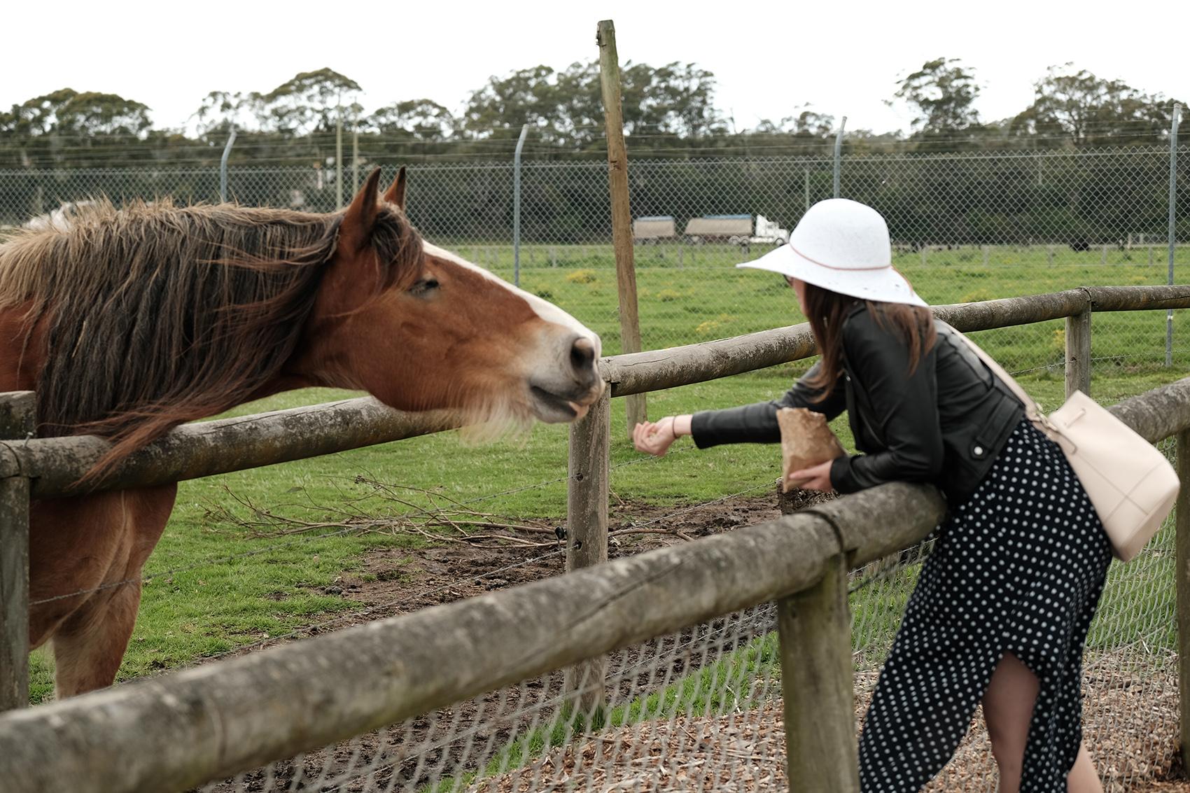 horsefeed.jpg