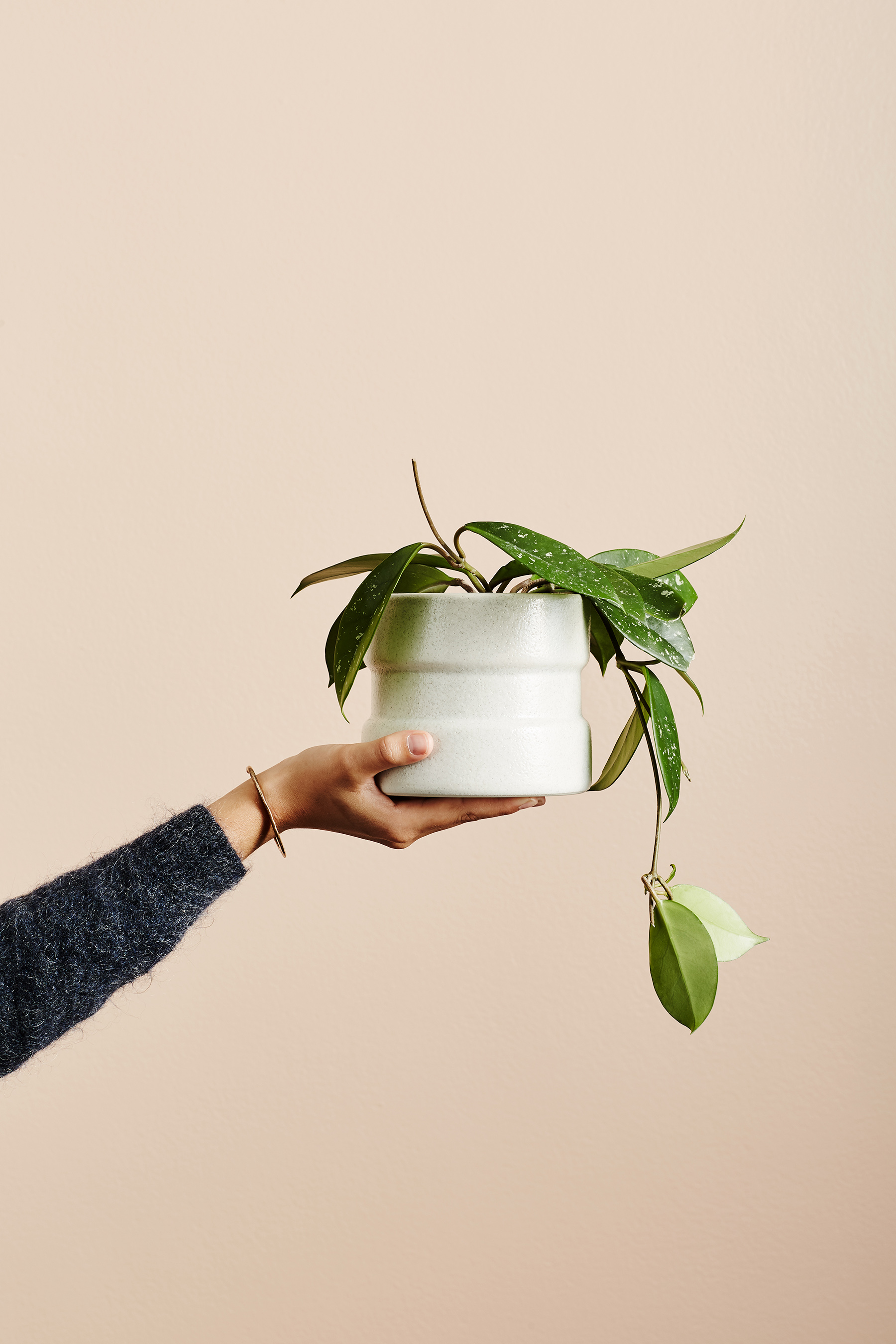 Ivy Muse Joni pot